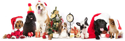 holiday_pets