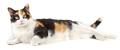 http://floridaanimalfriend.org/wp-content/uploads/2016/10/cat-right.png