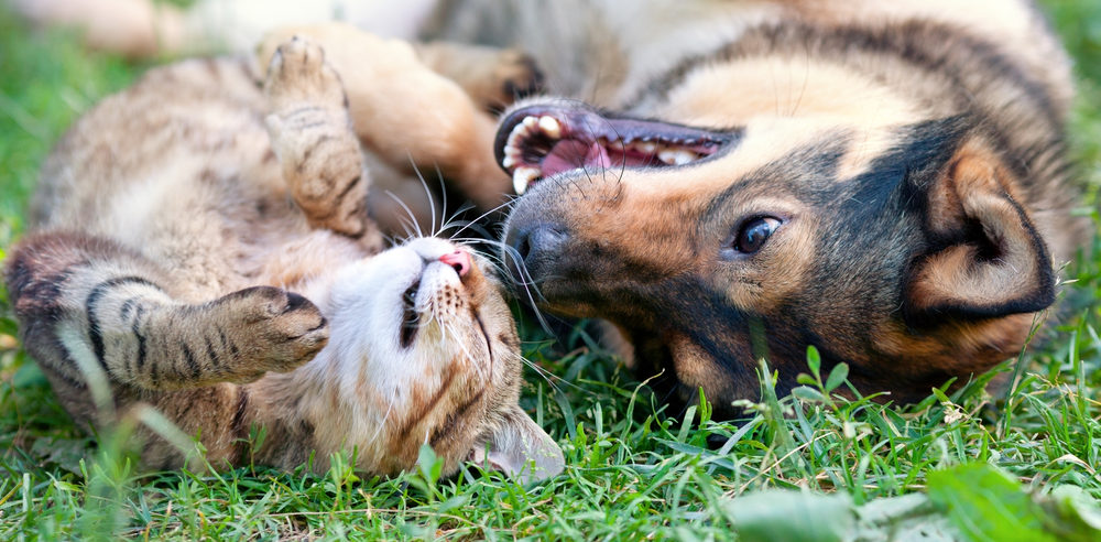 Top 5 Reasons to Spay and Neuter Your Pets