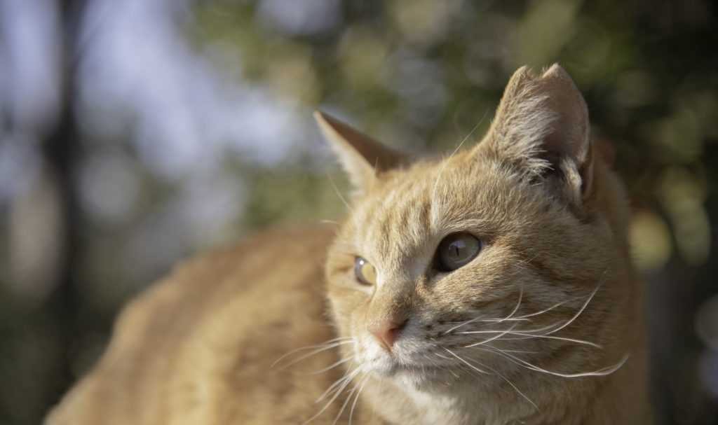 Trap-Neuter-Return: How This Program Saves Cats Every Year