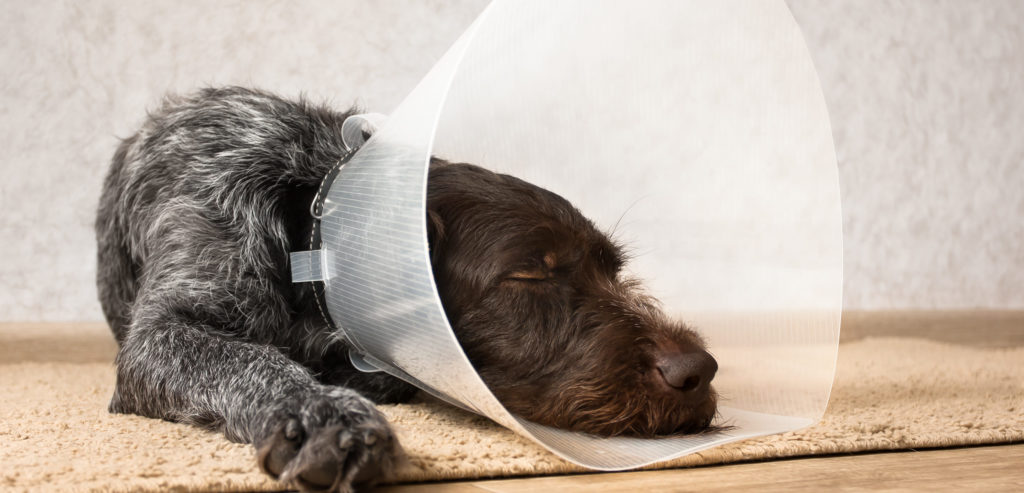 2019 Recommendations on Spaying and Neutering