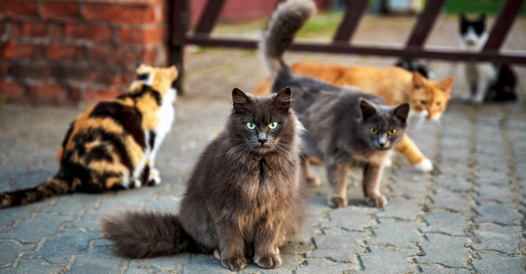 How Spaying Your Cat Saves Animal Lives