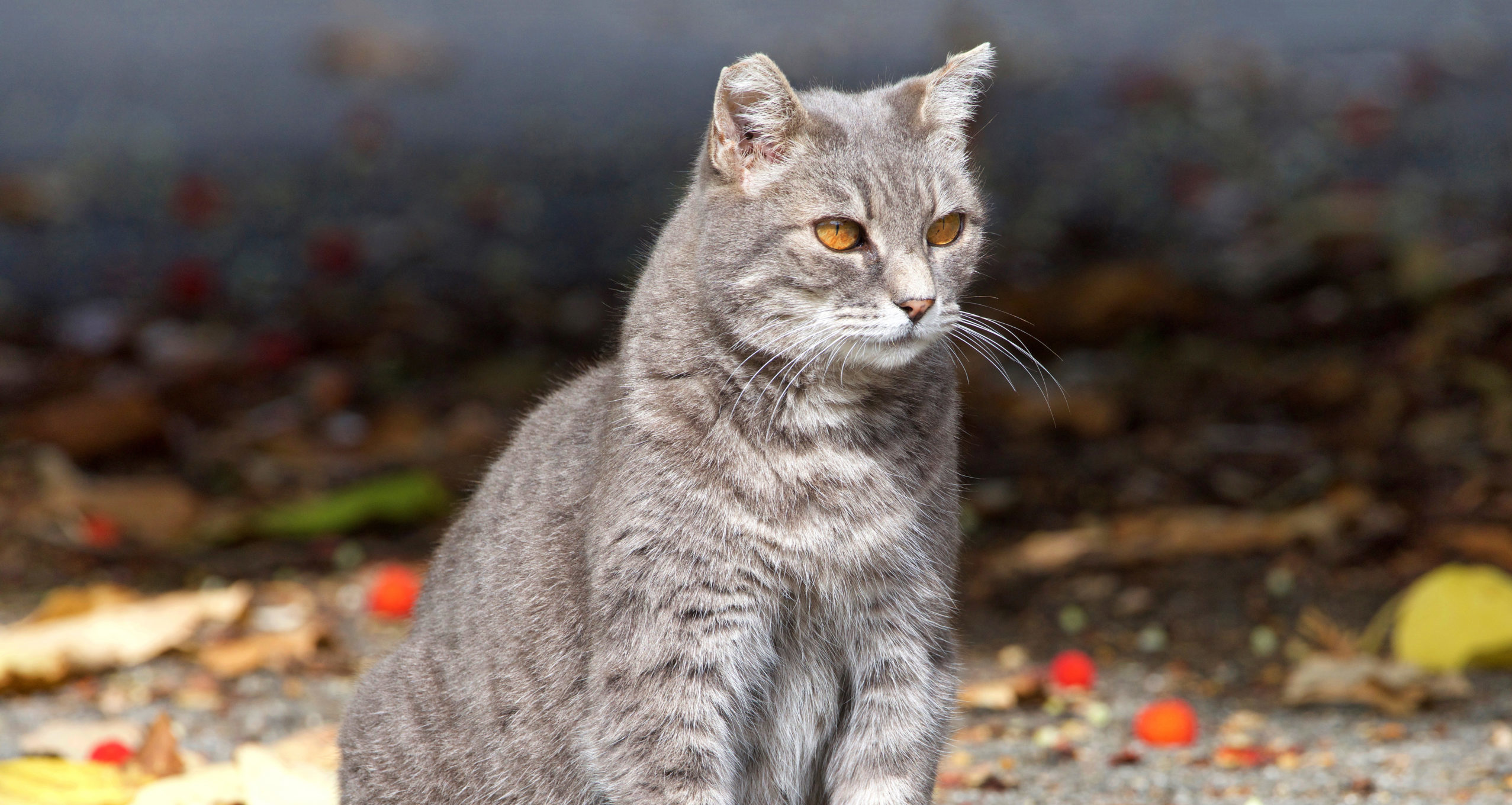 Feral Cats in Florida