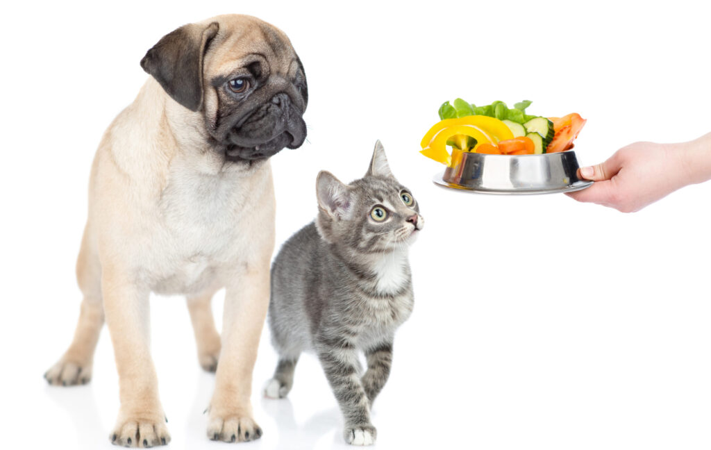 What Vegetables Can Dogs and Cats Eat?