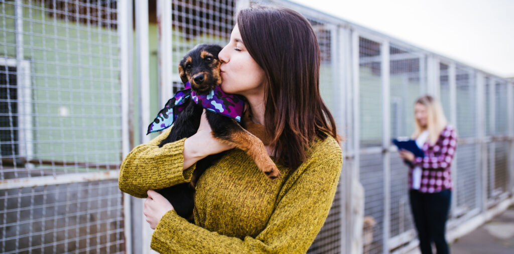 What to Do After Adopting a Dog from a Shelter: 7 Tips for the Transition