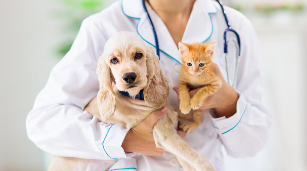 Learning from the Success of Volusia County's Mobile Spay and Neuter Clinic