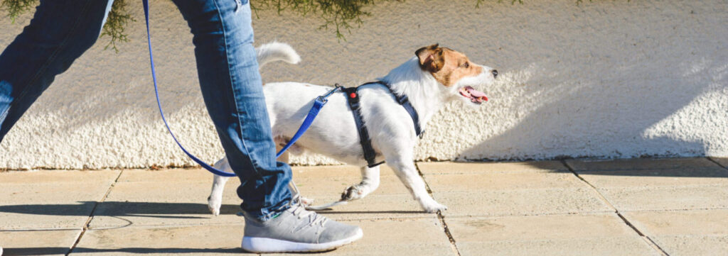 5 Benefits of Dog Walking for You and Your Pet