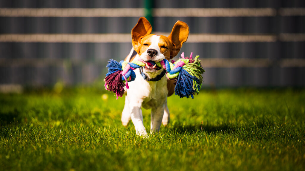 How to Choose the Right Toy for Your Pet