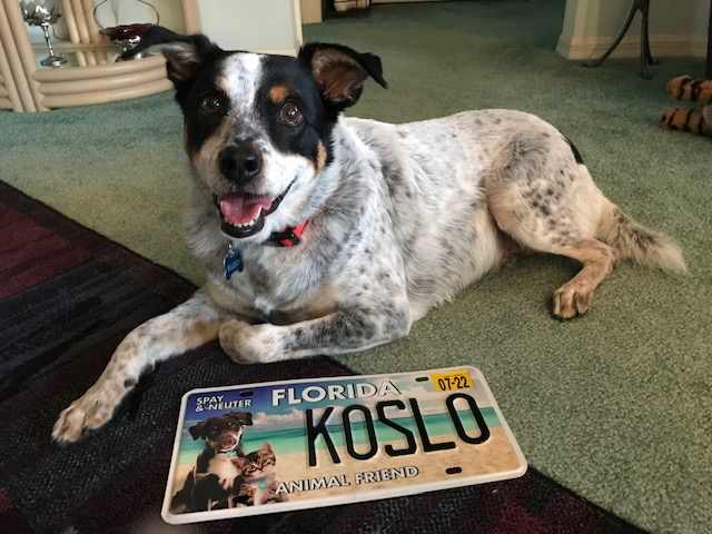 Common Questions About the Florida Animal Friend License Plate